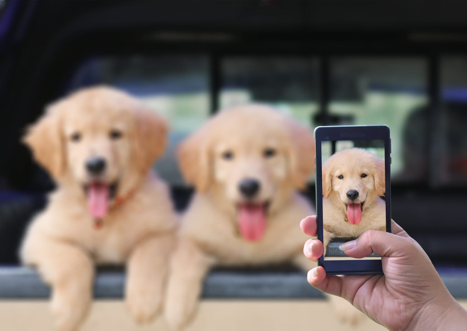 Dog Owners Take More Pictures of Their Pet Than Their Significant Other
