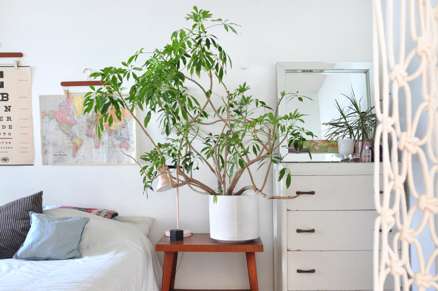 How to Buy a Plant That You Can Actually Keep Alive