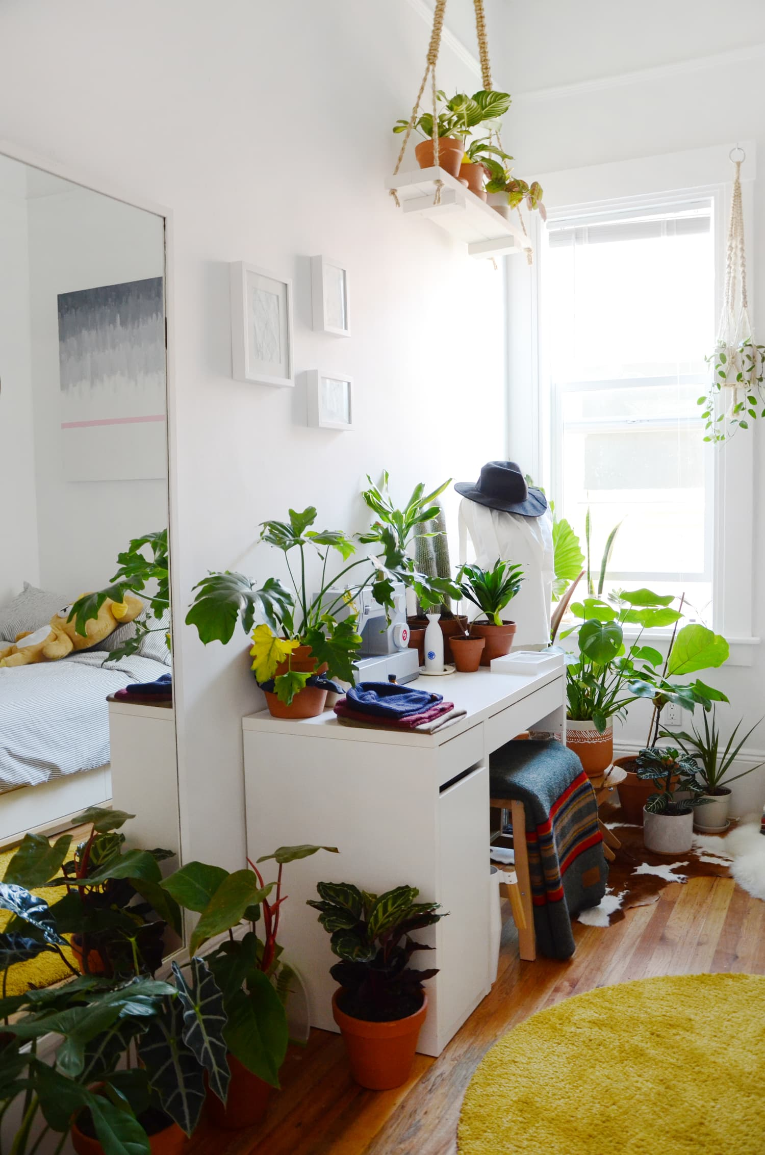 7 Easier Under-the-Radar Alternatives to the Most Popular Yet Finicky Houseplants
