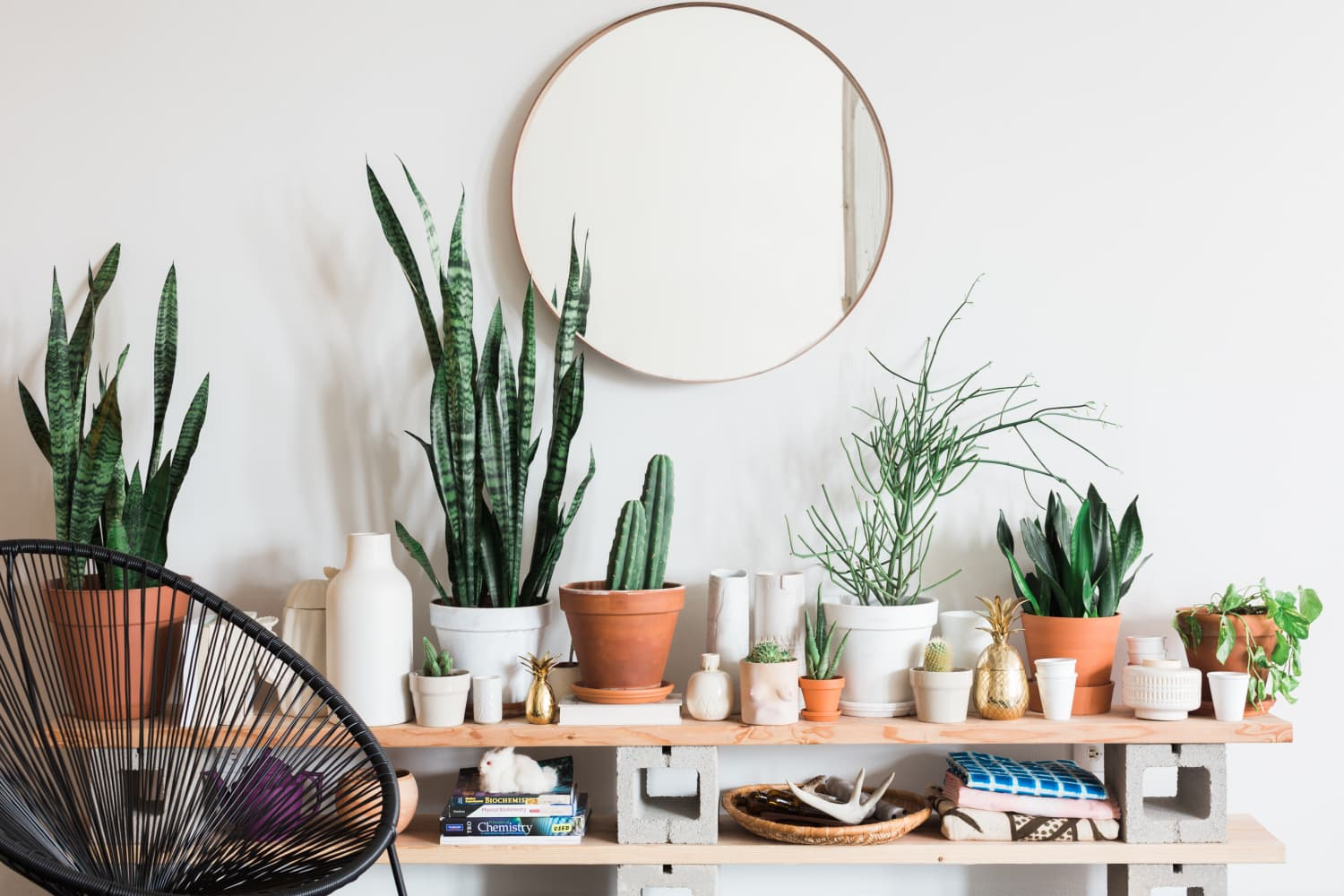 Wait, a Cacti Black Market Exists? How to Know If Yours Is Sustainably Sourced