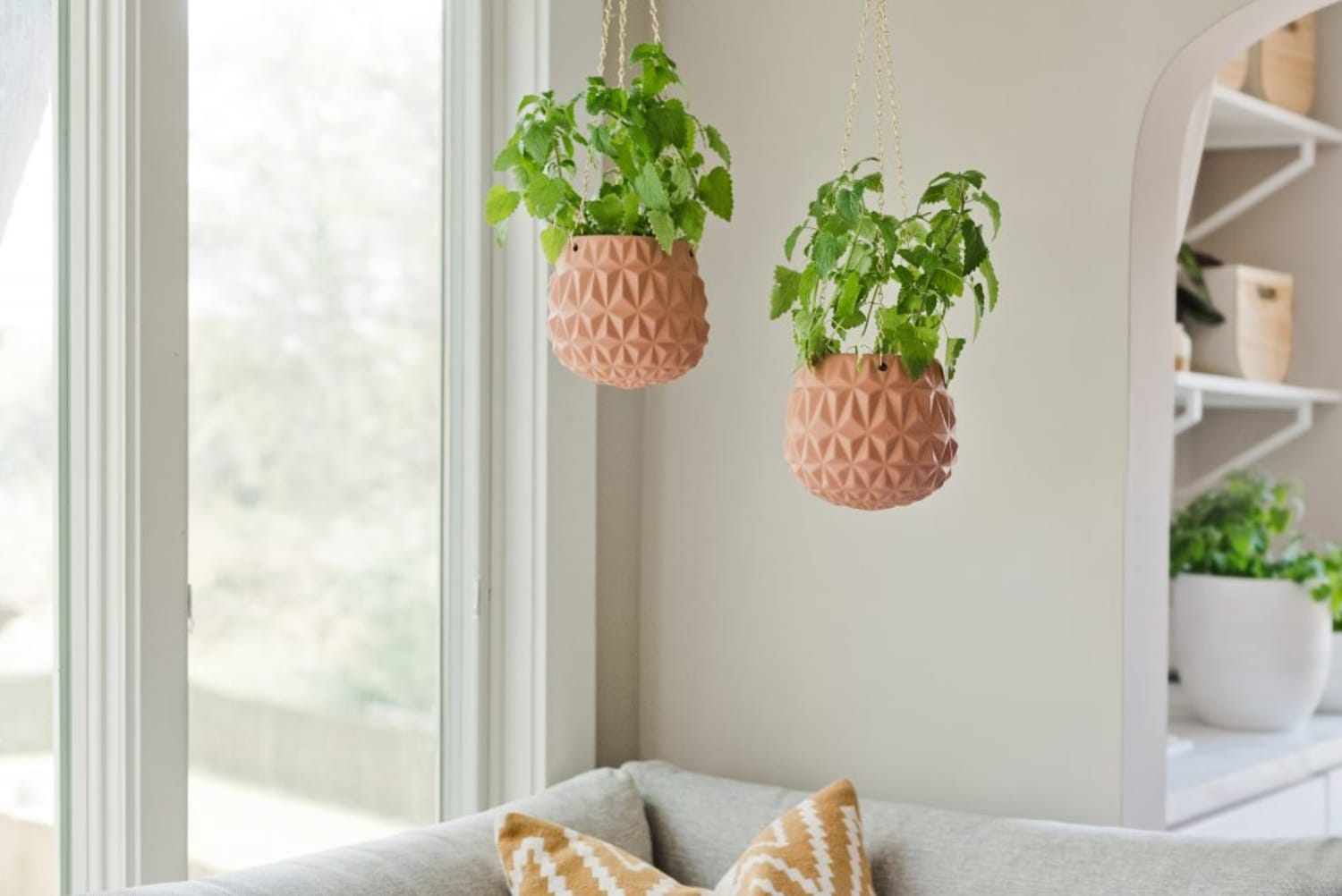 Catnip Fever: The Dos and Don'ts of Growing Catnip Indoors