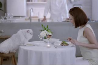 Cat Dining