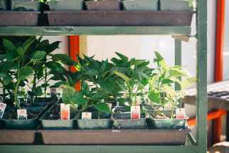 Choosing the Right Plants For Your Space and Lifestyle