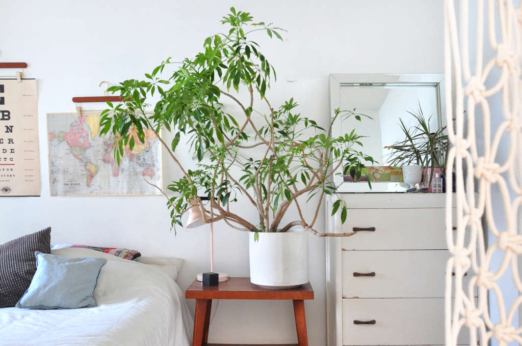 One Simple Thing You Can Do to Ensure Happy Houseplants