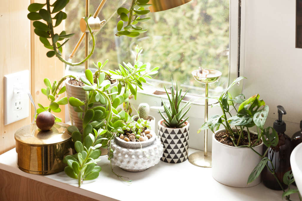 Gorgeous Ways to Make Your Home a Lush Green Oasis