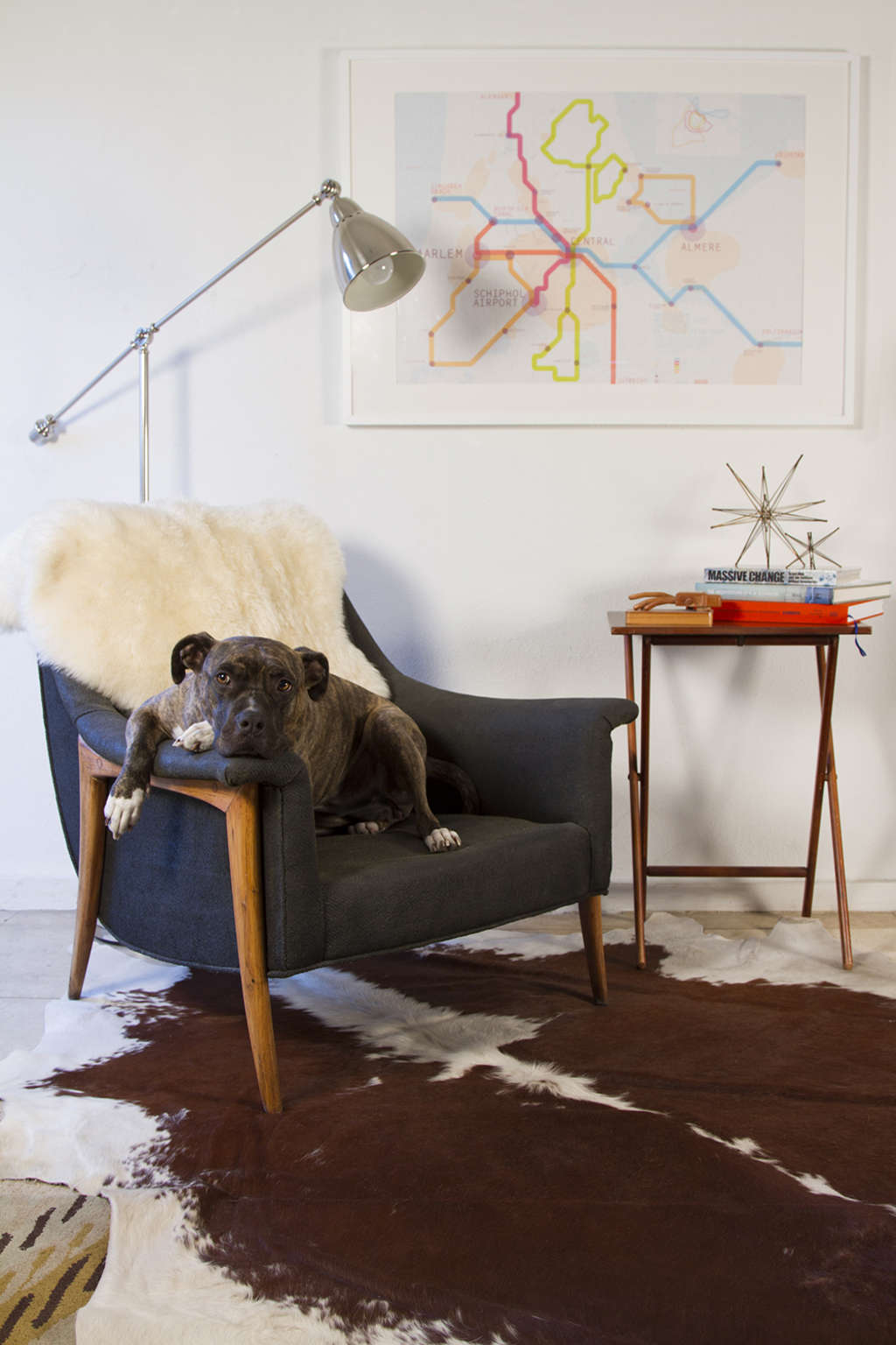 Our Best Advice This Year on Sharing Your Home With Pets