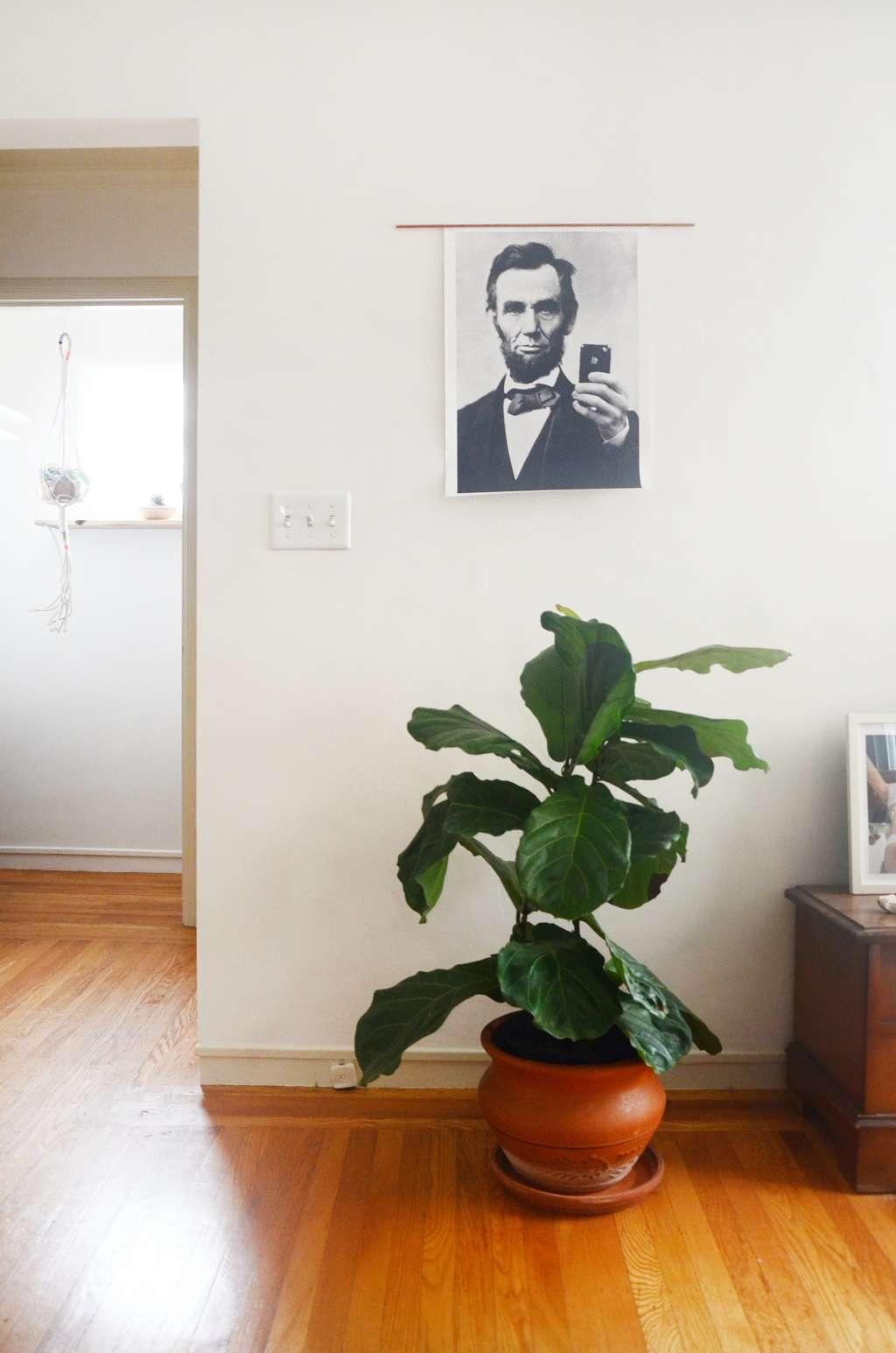 New Home Decor Plant Trend: The Pothos Plant