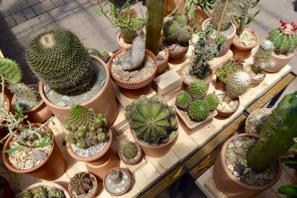 LA's Cactus Store Brings the Desert to New York This Summer