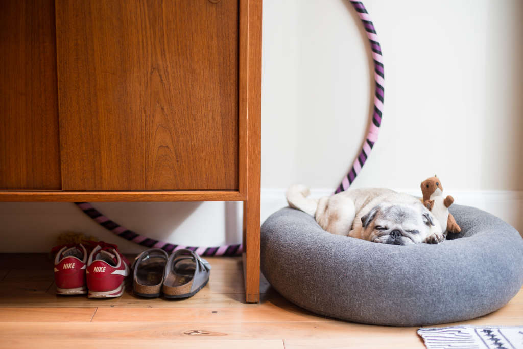 Dog-Friendly Remodeling Ideas in Increasing Order of Canine Craziness