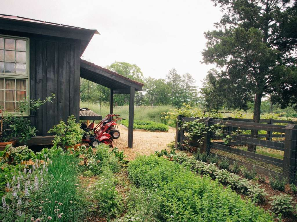 TLC: Caring For Your Garden