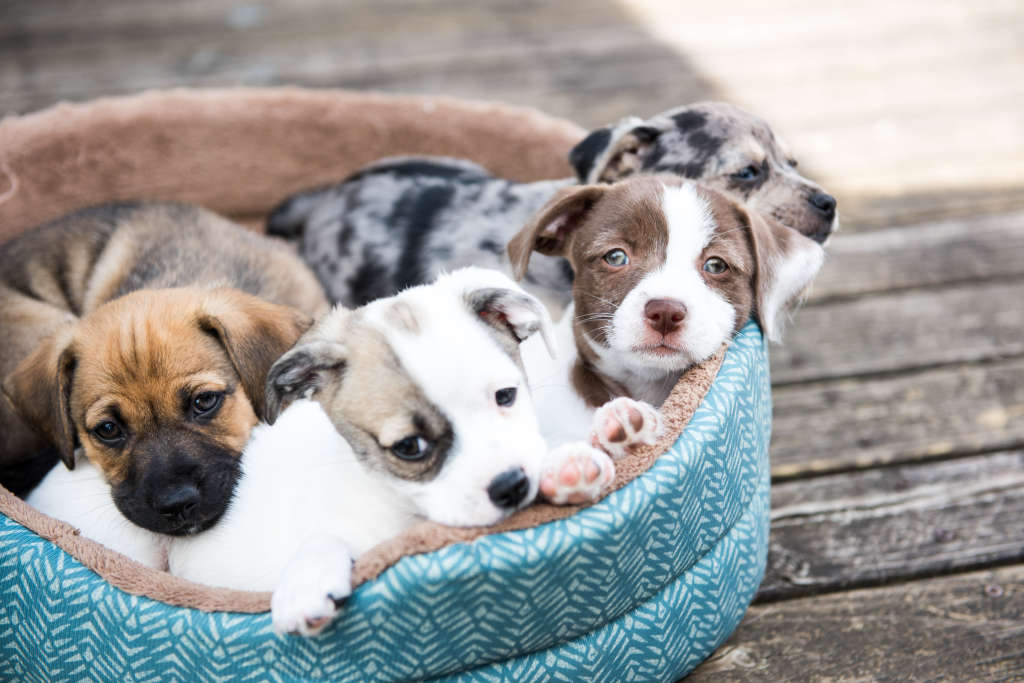 You Can Get Paid $100 An Hour To Play With Puppies All Day