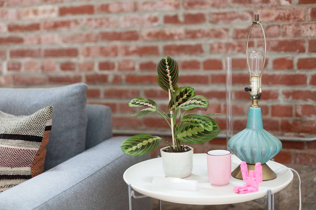 7 Houseplants With the Most Unique Leaves We've Ever Seen