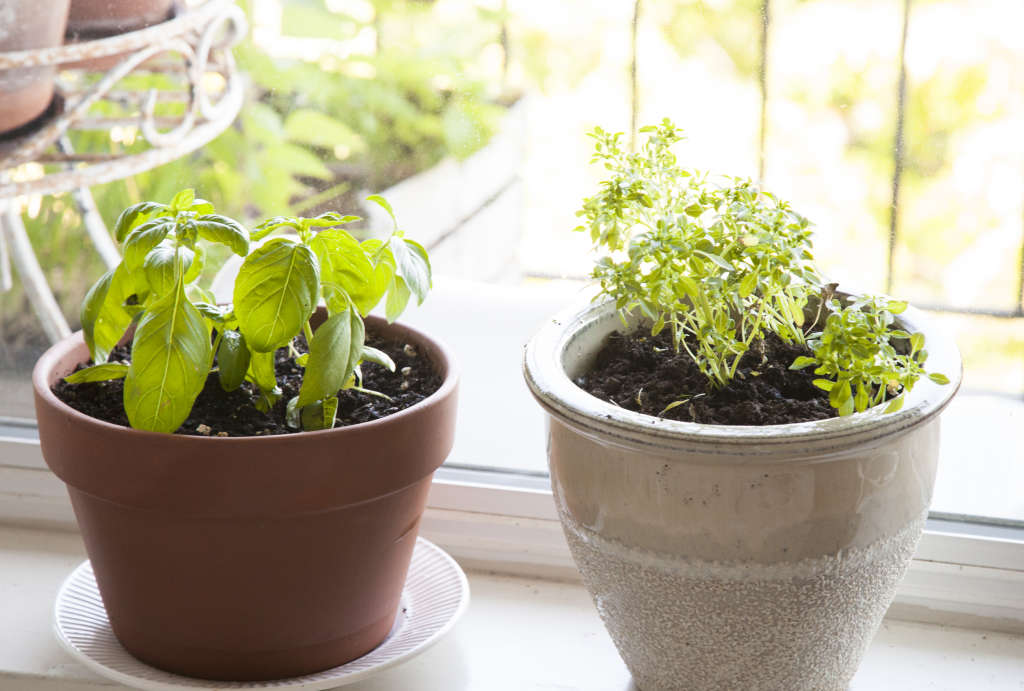 What to Know About Indoor Gardening