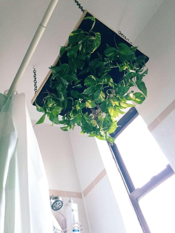 DIY Hanging Shower Planter