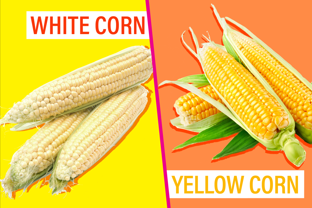 Difference Between White and Yellow Corn | Kitchn
