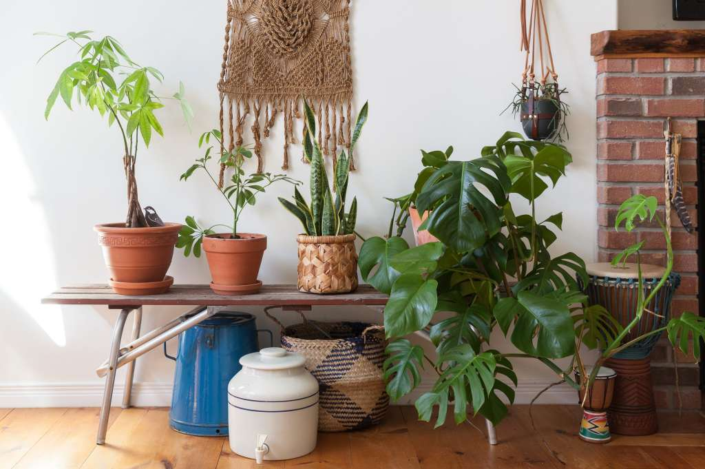 how to take care of money plant in winter
