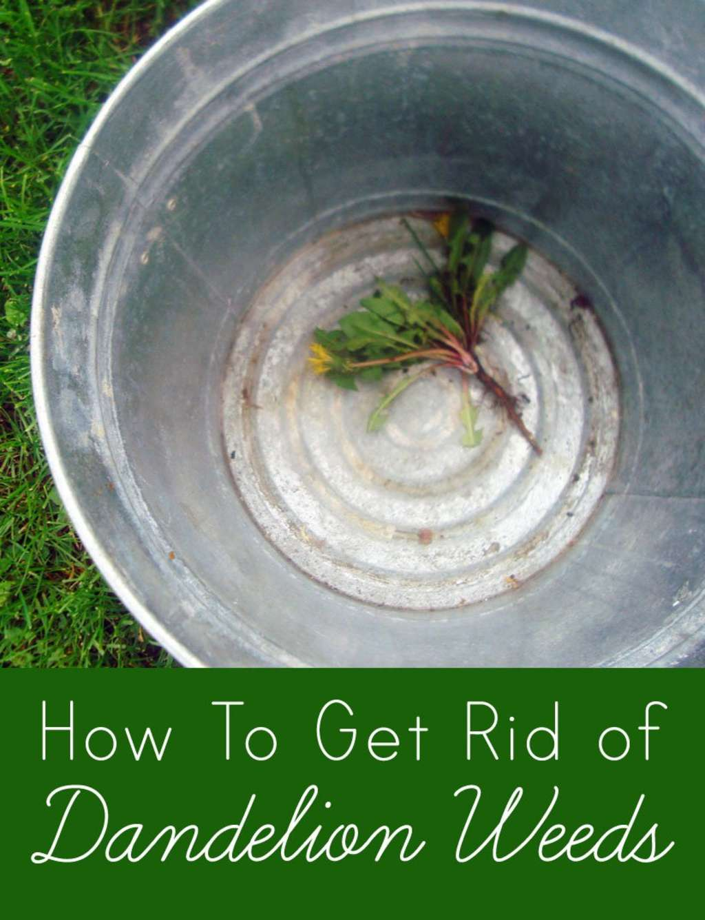 how to get rid of dandelions without killing grass