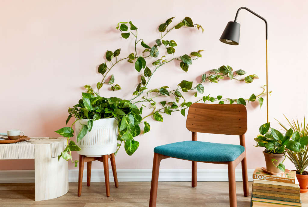 The Easiest Way to Make a Living Greenery Wall