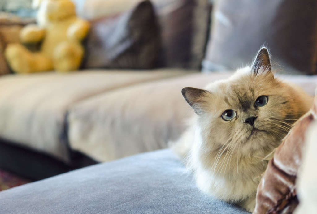 If Your Cat Had a Wish List, Here's What Would Be On It