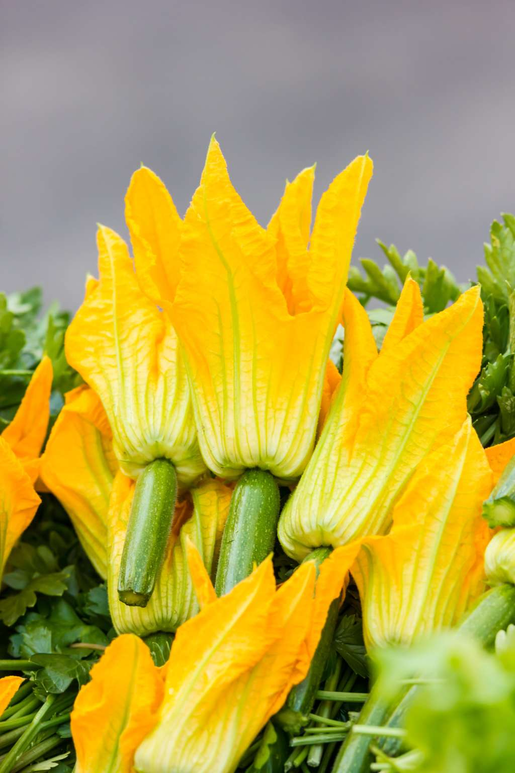What You Need To Know About Squash Blossoms The Flower We Love To