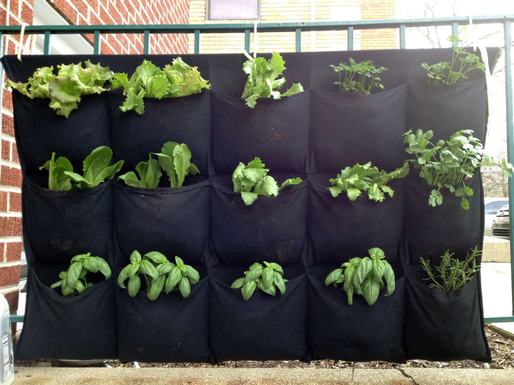 A Smart, Cheap Garden for Small Spaces: The Hanging Herb Garden
