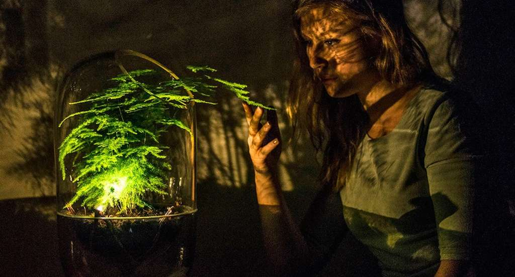This Lamp Is Actually Powered by a Houseplant