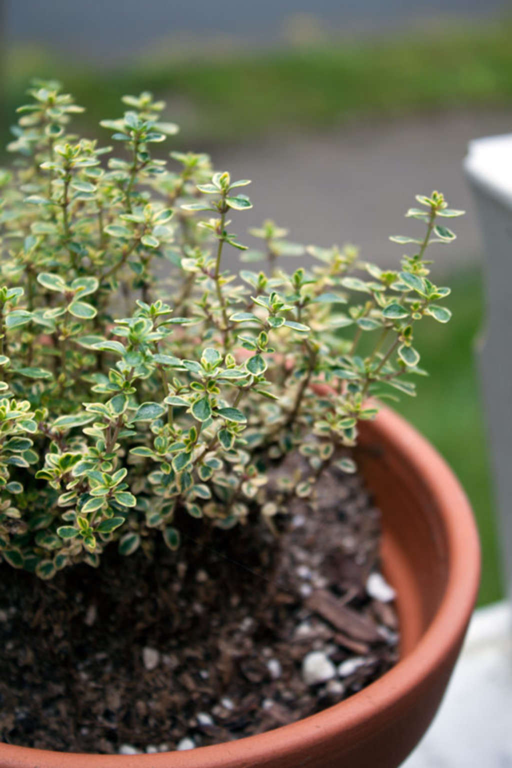 The 5 Best Pieces of Advice If You Want to Start a Small Container Garden