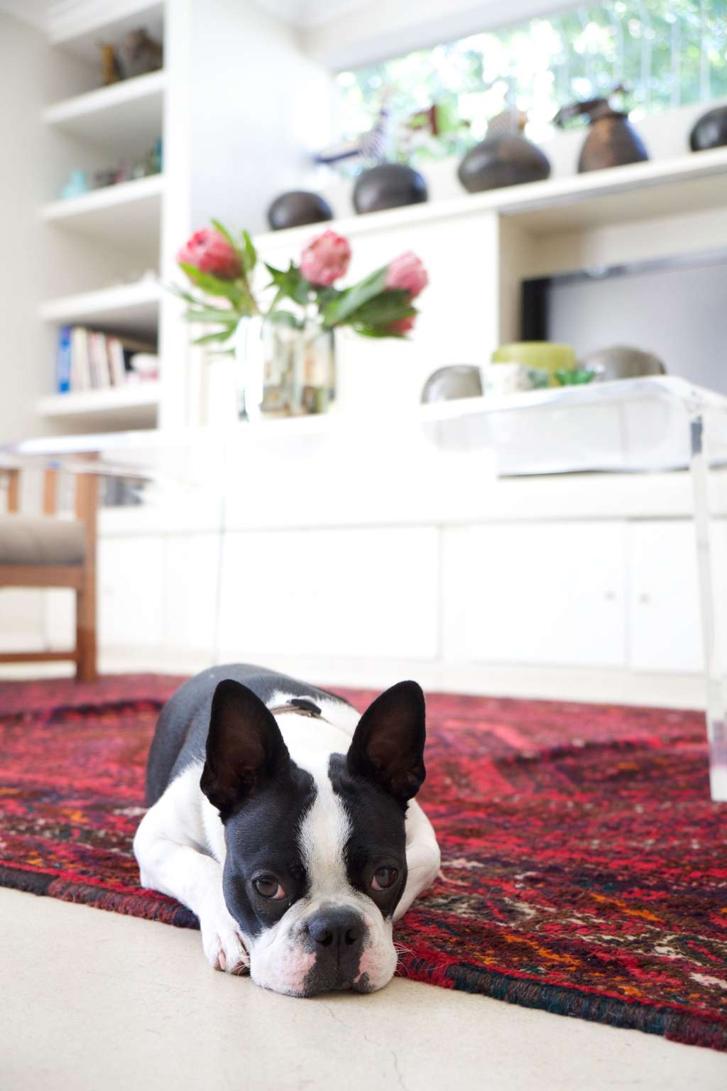 6 Easy Pet Clean-Up Hacks Everyone Should Know