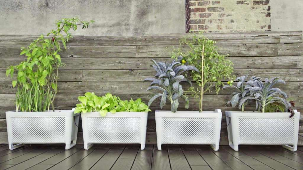Turn Your Black Thumb Green With This Smart Planter