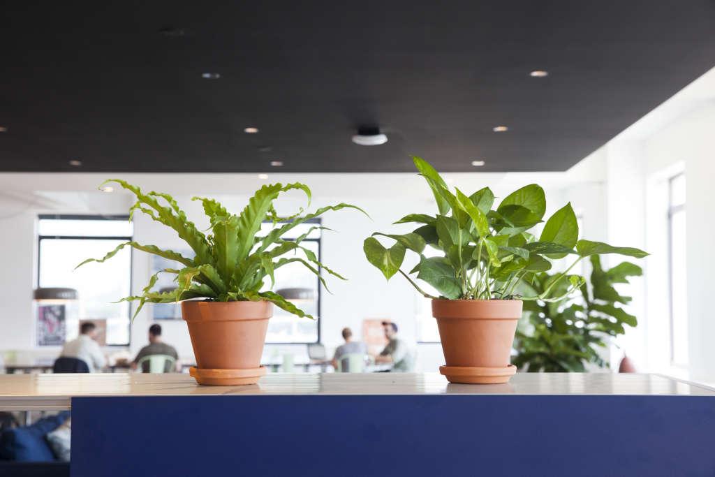 Office Plants - Best Low Light Maintenance Plants ...
