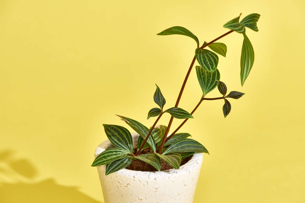 This Little Plant Can Survive in Only a Sliver of Sun
