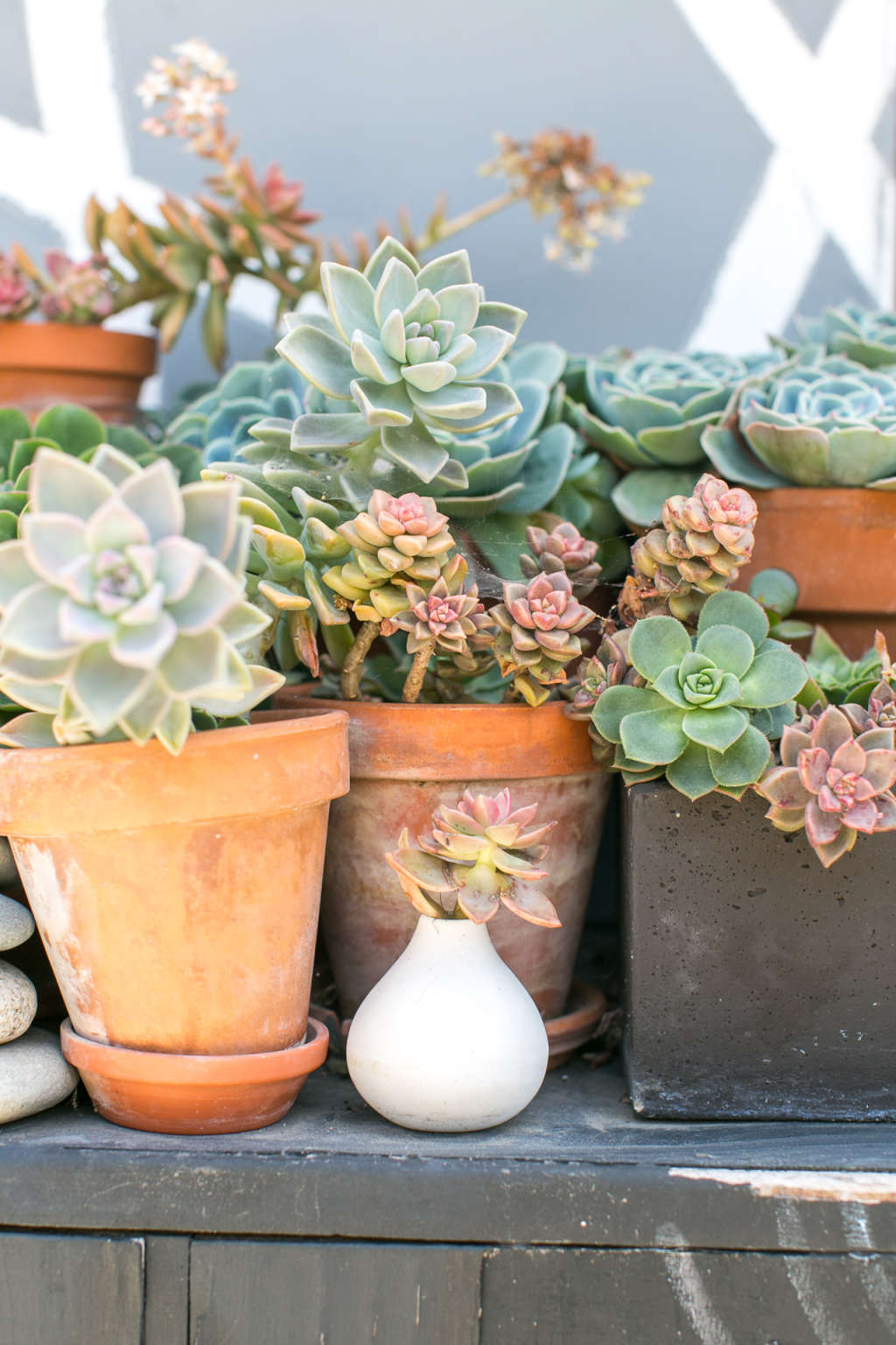The Biggest Dos and Don'ts of Owning Succulents