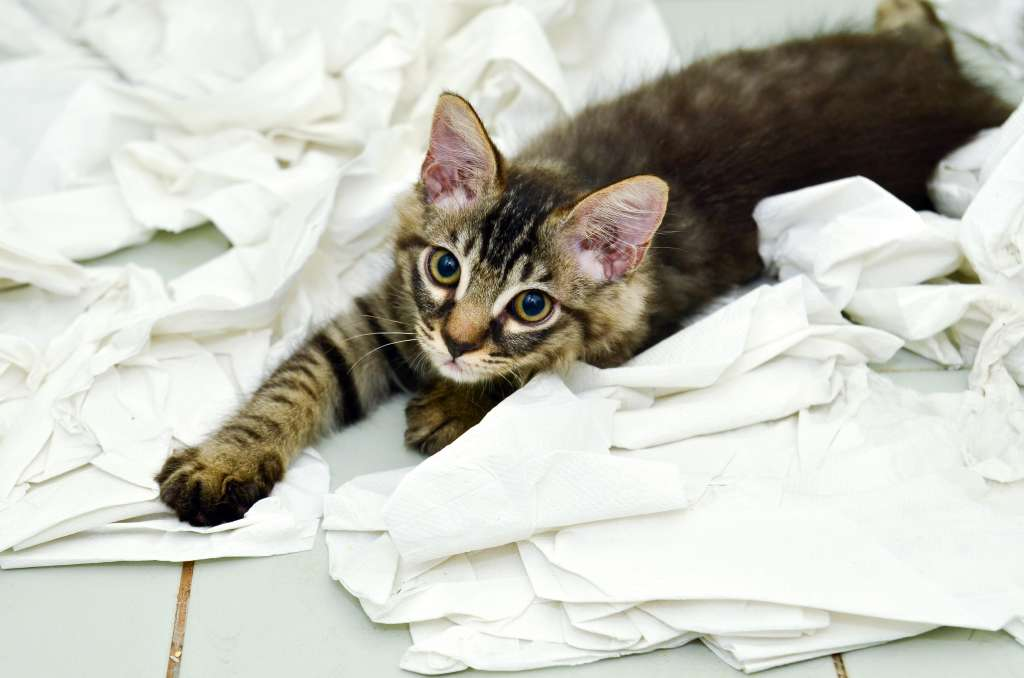 A Brief History of Toilet Paper