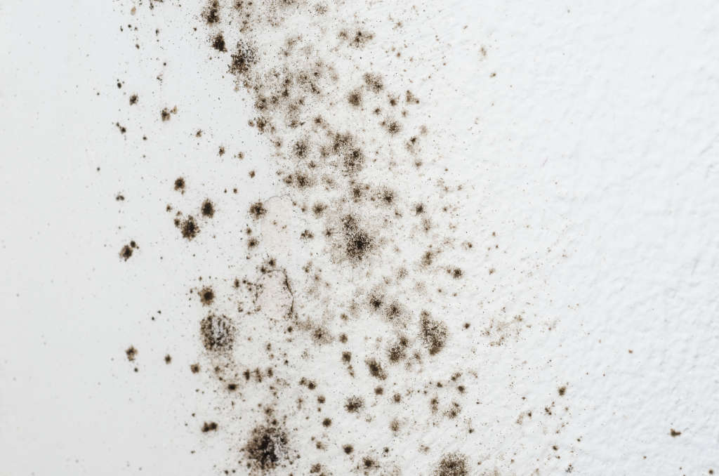 black mold symptoms how to get rid of black mold apartment therapy. Black Bedroom Furniture Sets. Home Design Ideas