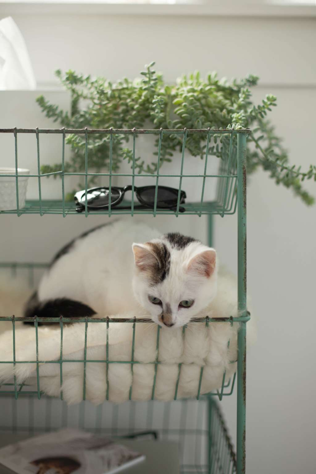 5 Pet-Safe Plants (& How to Keep Your Furry Friends Away from Them, Anyway)
