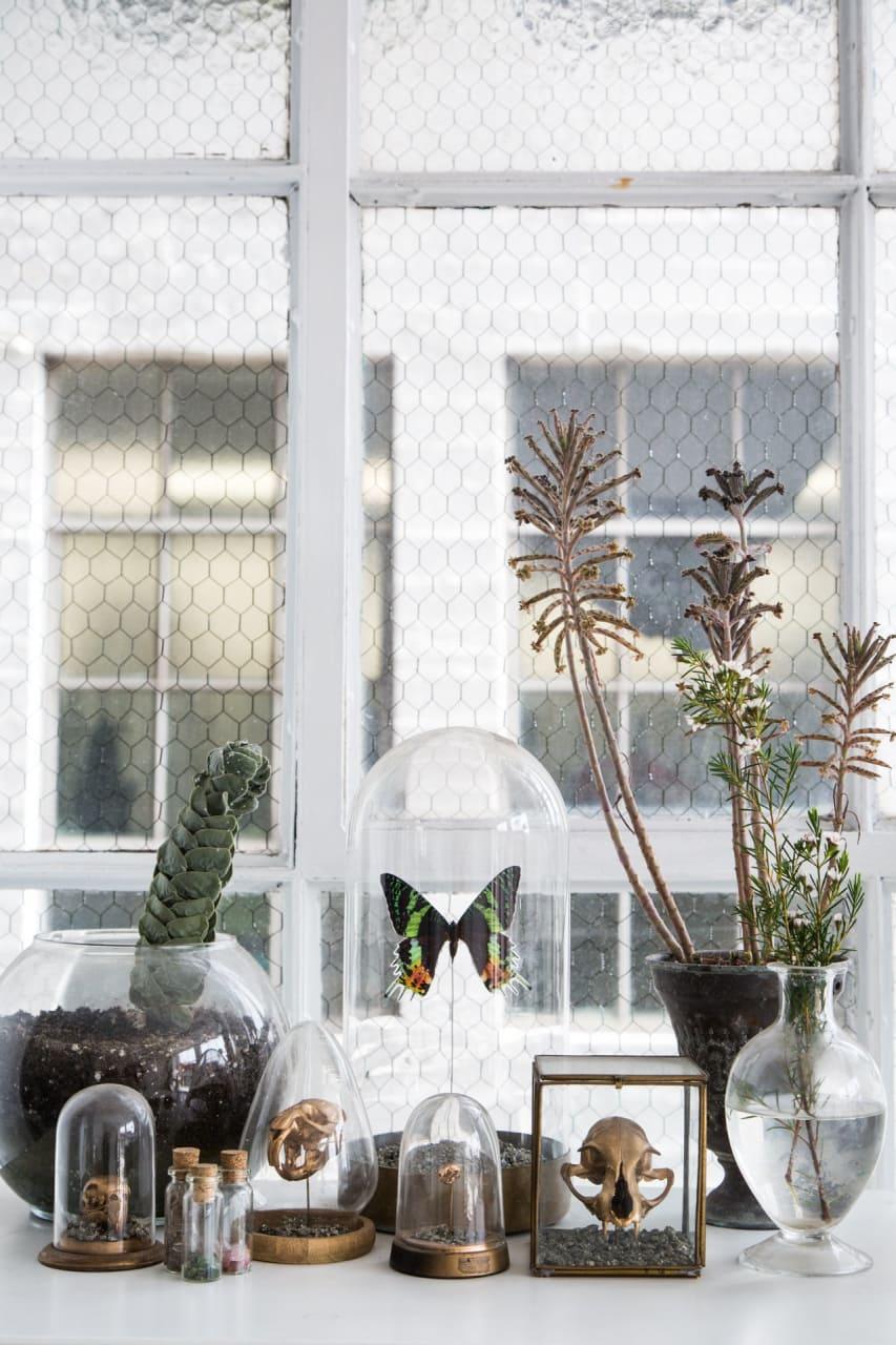 vlinder-in-stolp