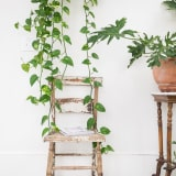 Hanging plant and vintage chair