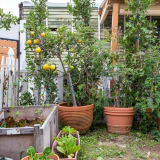 Vegetable garden and fruit tree