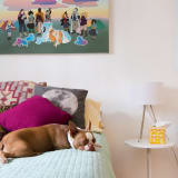 a lazy boston retriever dog snoozing on a modern bed with modern art hanging on the wall above