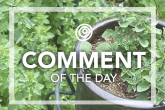 Oregano in a pot - Comment of the Day