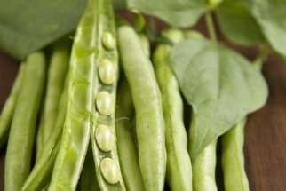A Bundle of Snap Peas