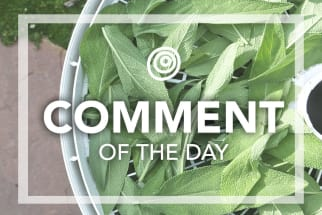 Fresh sage - Comment of the Day