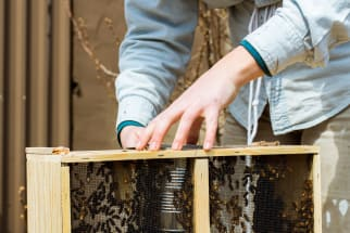 A Visit with Jana Kinsman of Bike a Bee: Building Hives & Sharing Honey in Chicago