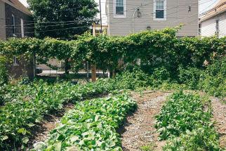 Getting Your In-Ground Garden Ready