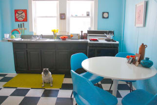 blue-kitchen-pug