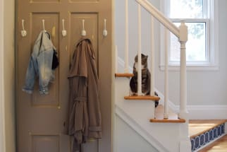A cat sits on a sunny staircase in the entryway of a family home.