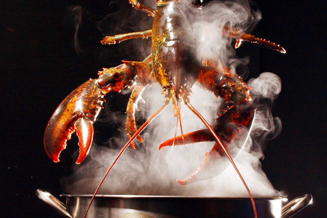 Lobster Being Dunked into a Steaming Pot
