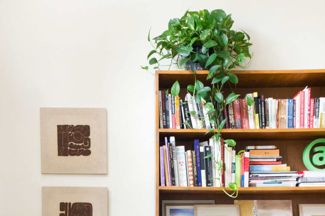A gray cat on a gray sofa in front of a brown wood bookshelf full of books topped with a green vine plant.