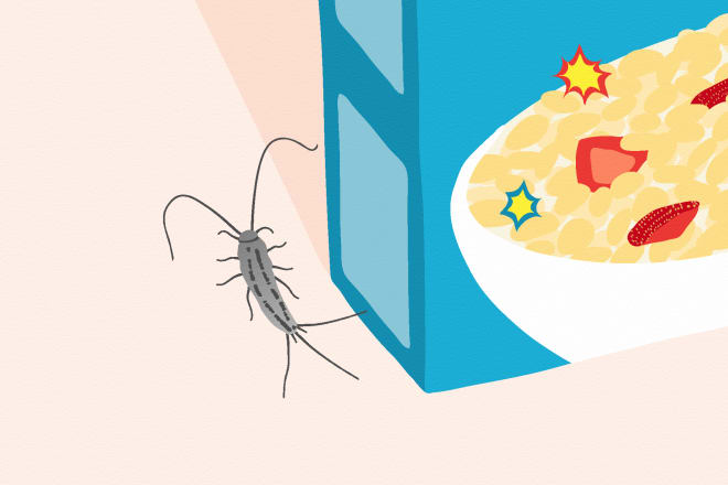 Insect Amp Pest Solutions Kitchn