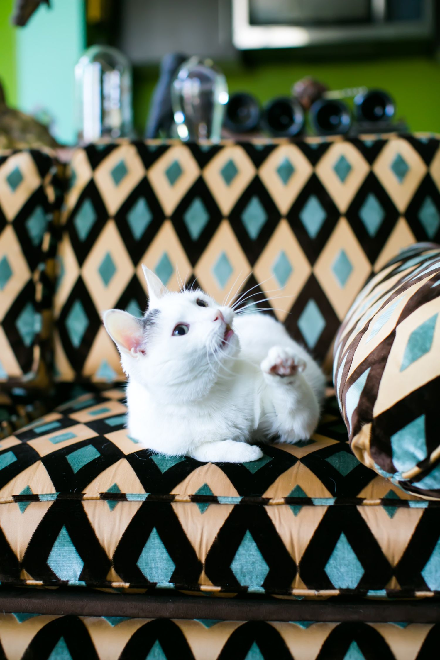 5 of the Hottest New Decorating Trends According to Cats